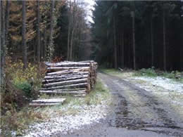 German Forest Road