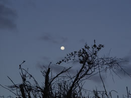 Moon over Bush
